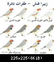 معرض صور طيور الزيبرا • téléchargement (1)