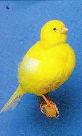 طيور ولا اروع Bord