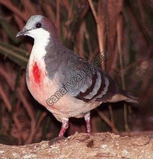 الطائر الجريح ... القلب الدامي