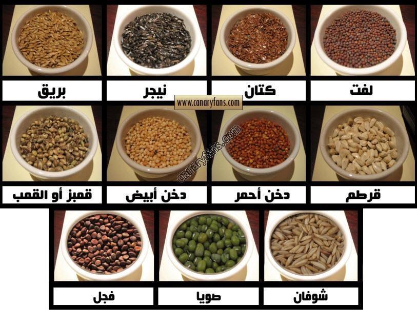 نصائح في التغذية السليمة للكناري – د. عبده أبو سير