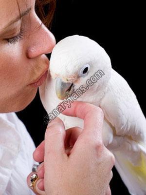 موسوعة طيور القفص و السلاكة جزء 2- مترجم