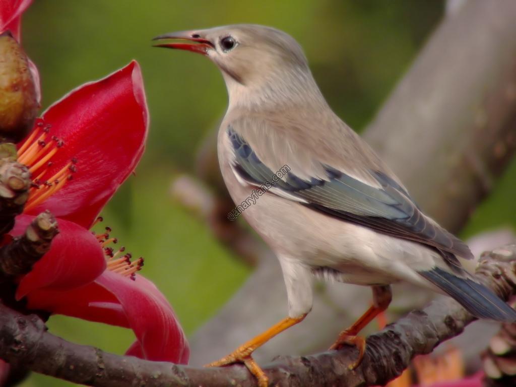 سلسلة طيور فى الطبيعة : الحلقة السادسة