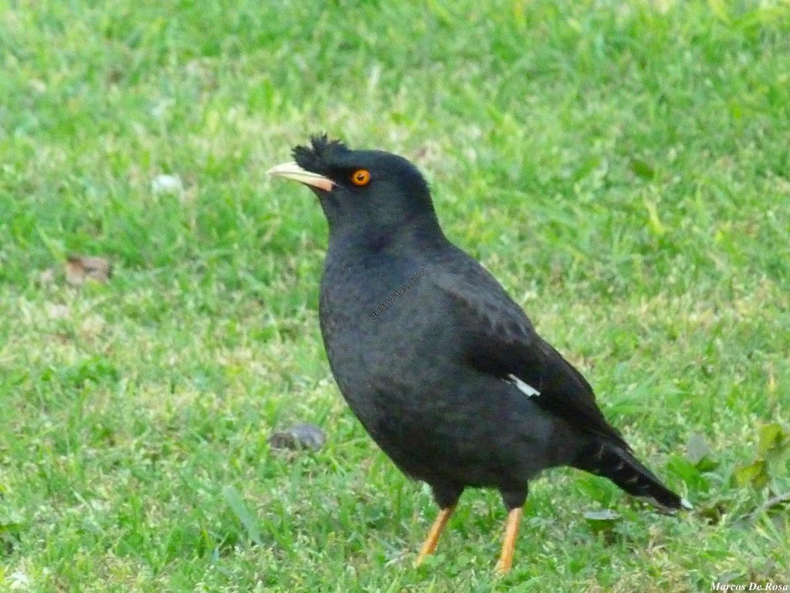 سلسلة طيور فى الطبيعة : الحلقة الثالثة