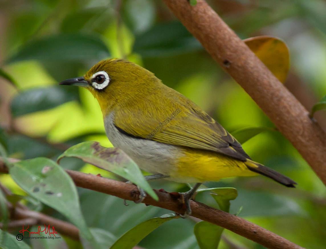 سلسلة طيور فى الطبيعة : الحلقة السابعة