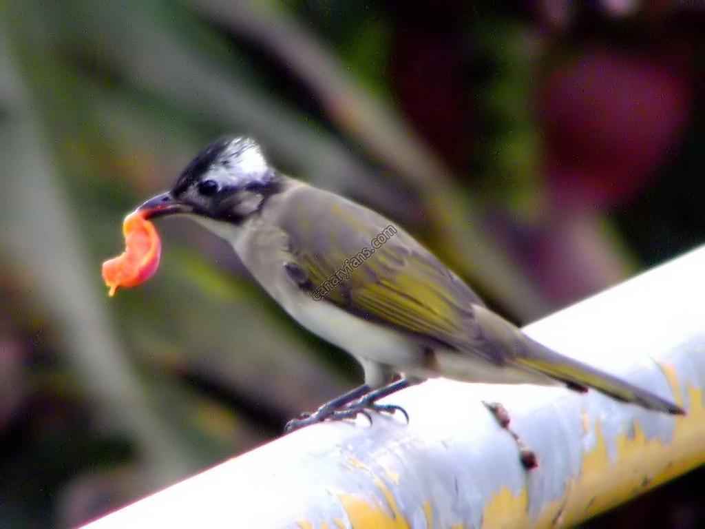 سلسلة طيور فى الطبيعة : الحلقة الخامسة