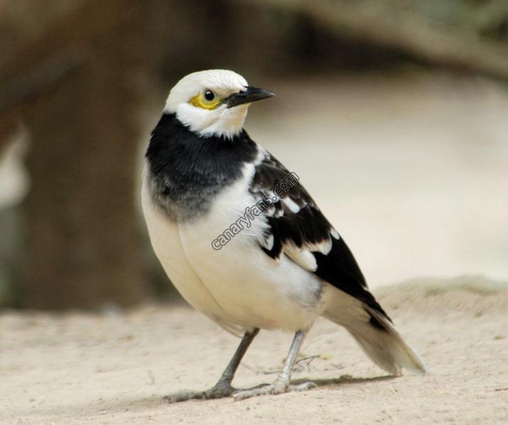 سلسلة طيور فى الطبيعة : الحلقة الرابعة