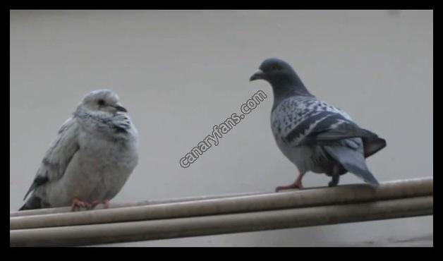 سلسلة طيور فى الطبيعة : الحلقة الثامنة