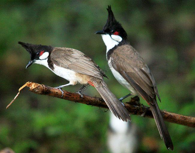 سلسلة طيور فى الطبيعة : الحلقة الاولى