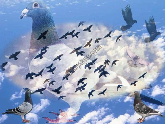 صور لاجمل اطفال في الكون Pigeon77